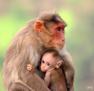 Photo Credit: Yogendra174 via Compfight cc
